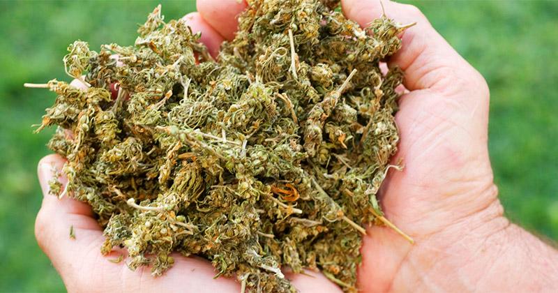 le New Jersey veut légaliser le cannabis
