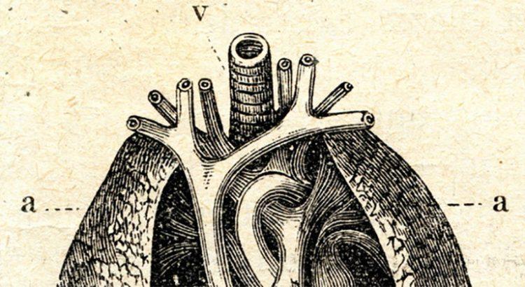 THC et inflammation des poumons