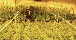 Damian Marley : un dispensaire de cannabis au Colorado, une plantation en Californie