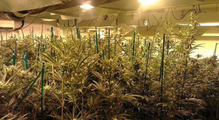 L'Ecosse veut légaliser le cannabis médical