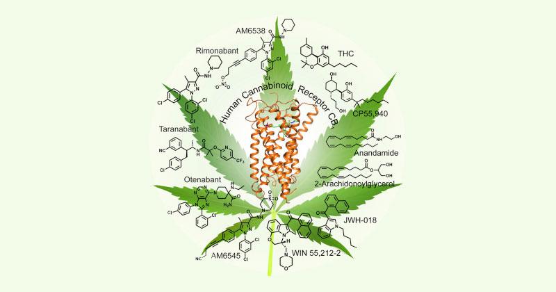 Récepteur cannabinoïde CB1
