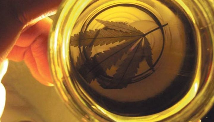 députés argentins huile de cannabis