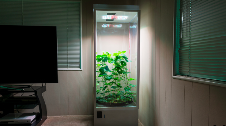 Grow Box d'Apple