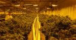 La plus grosse usine de cannabis du monde prévue dans un petit village canadien