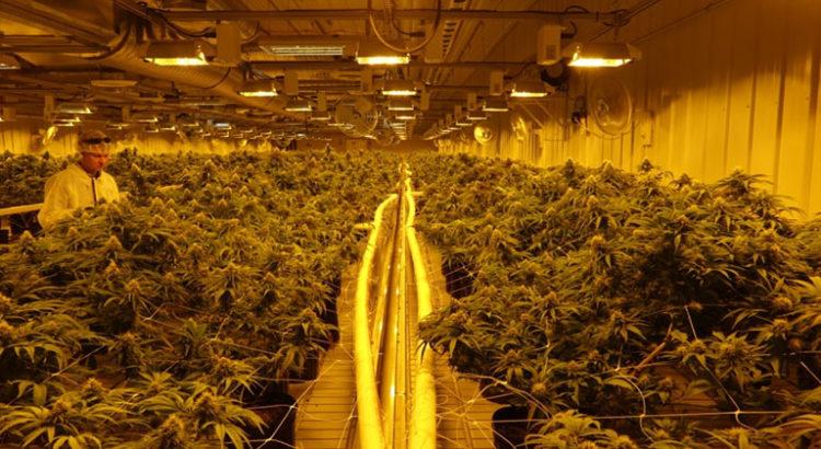 Plus grosse usine de cannabis au Canada