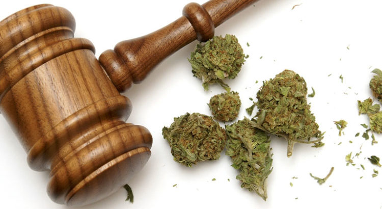 Avocat du cannabis