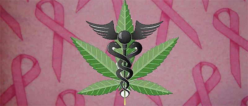 Du cannabis pour traiter le cancer du sein
