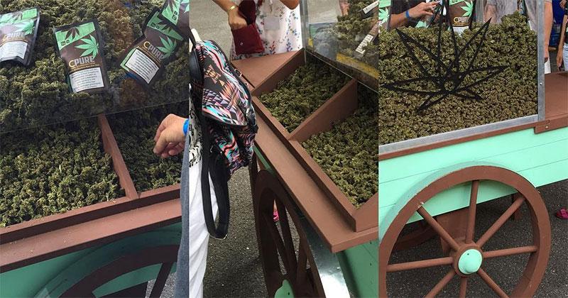 Cannabis suisse au CBD