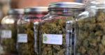 Le Danemark va tester le cannabis médical