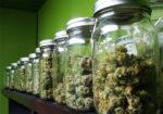 Comment conserver le cannabis