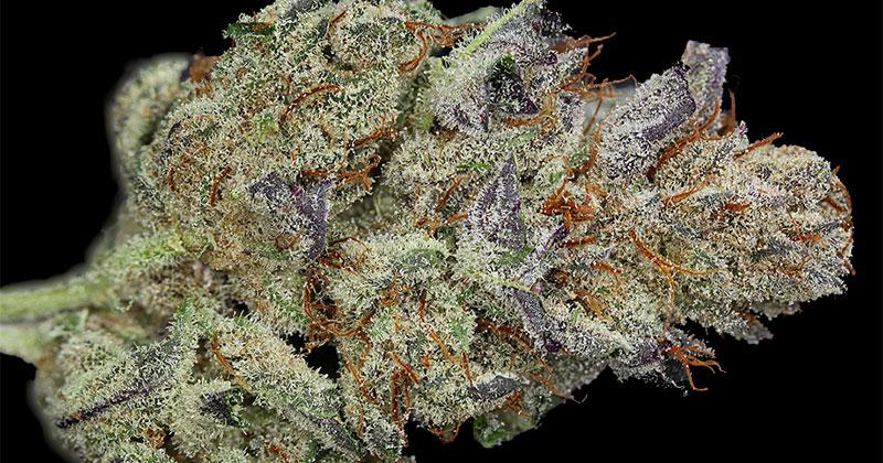 Variétés les plus rares de cannabis