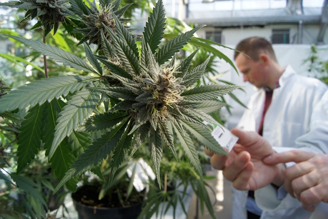 2.35 millions de dollars cannabis