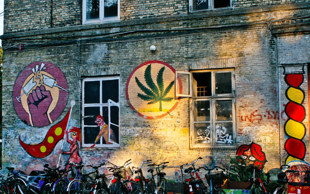 Copenhague cannabis