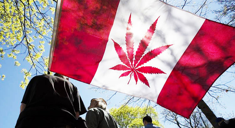 Cannabis au Canada : la légalisation approche