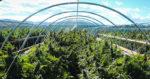 La production de cannabis aux Etats Unis dépasse la demande