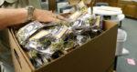 Seattle va tenter une nouvelle fois de légaliser la livraison de cannabis