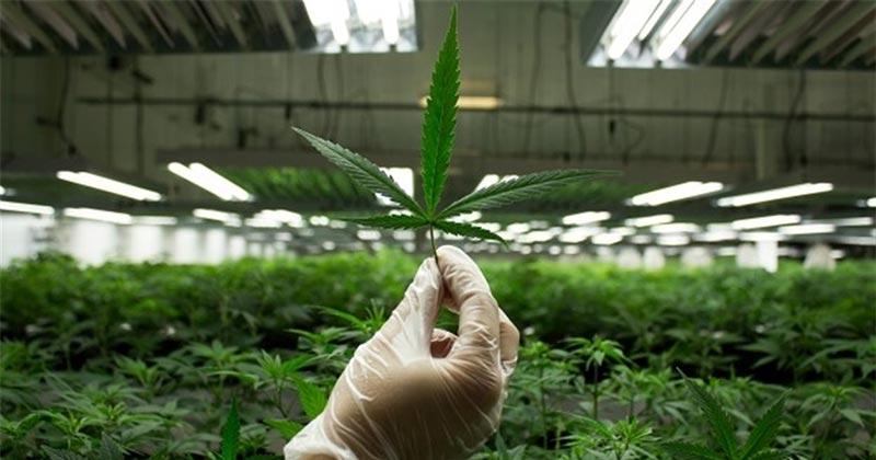 Ventes de cannabis aux Etats-Unis en 2016