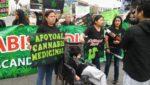Pérou : proposition de loi de légalisation du cannabis médical