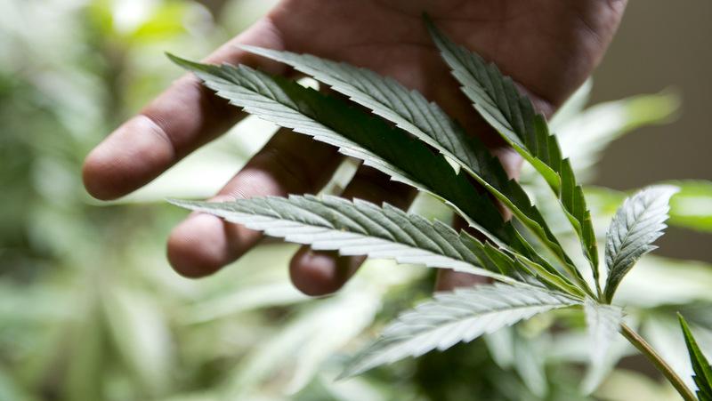 République Tchèque, rupture de stock de cannabis