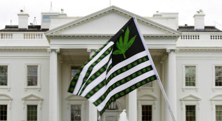 Trump et la répression du cannabis