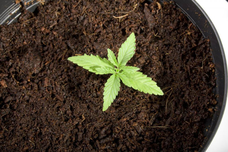 Les 5 variétés les plus difficiles à faire pousser