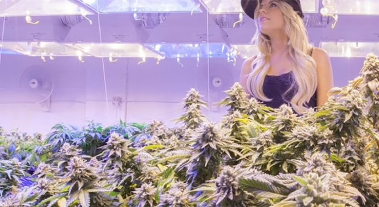 Cannabis légal et bière
