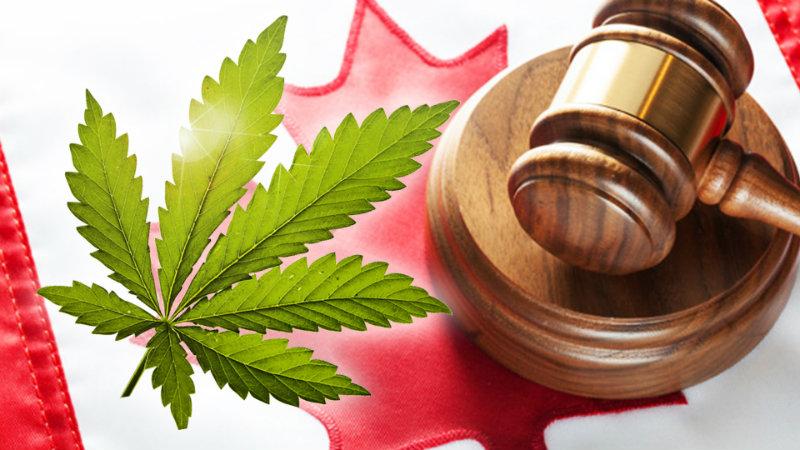 Canada le projet de loi sur la légalisation du cannabis passé au crible