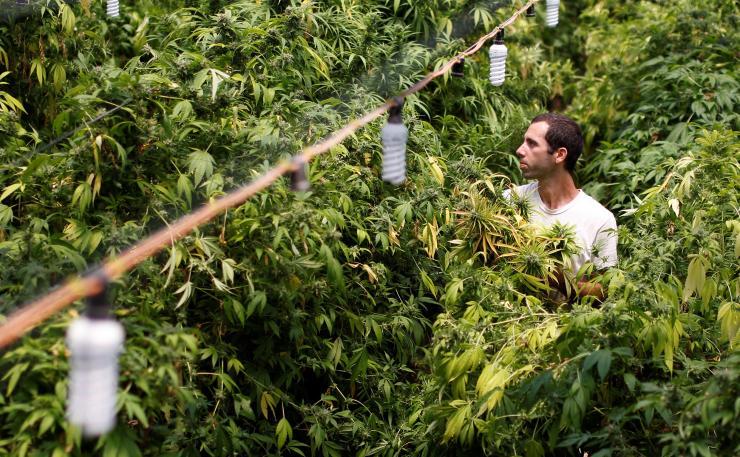 L'Australie alloue 315 000 € pour monter une filière locale de cannabis médical