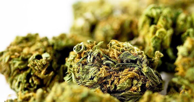 Cannabis et nausées