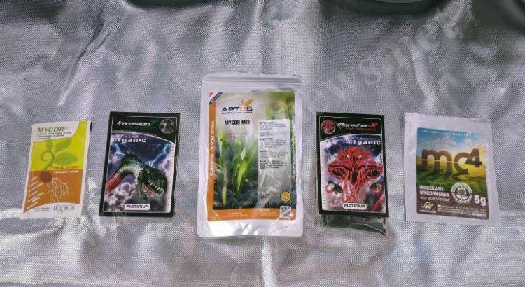 Test champignons mycorhiziens