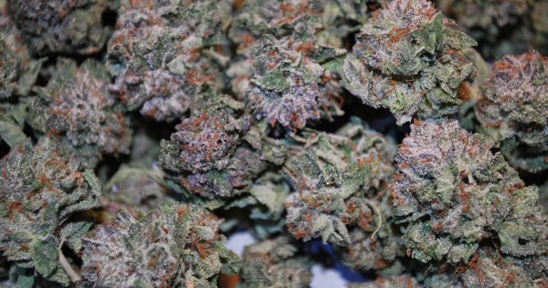 Cannabis en Nouvelle-Zélande