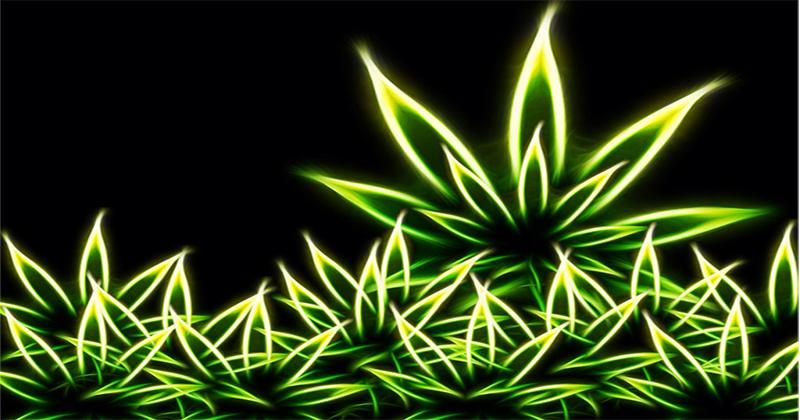 Cannabis et technologie