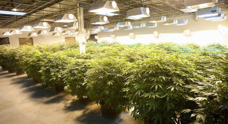 Etats-Unis - Le marché du cannabis pourrait atteindre 70 milliards de dollars d'ici 2021