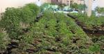 L'Espagne : le nouveau moteur du cannabis en Europe ?