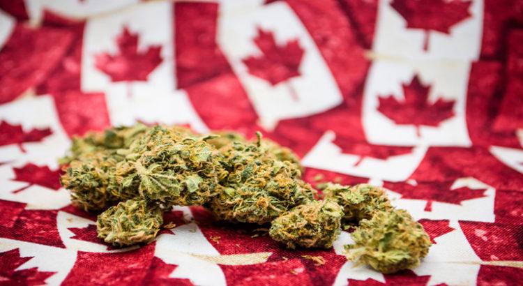 Le canada craint une pénurie de cannabis d'ici la légalisation