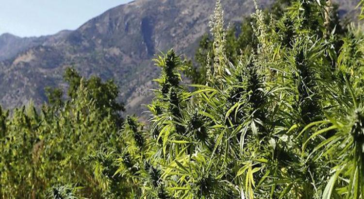 Massachusetts - Révision majeure du projet de loi sur le cannabis récréatif