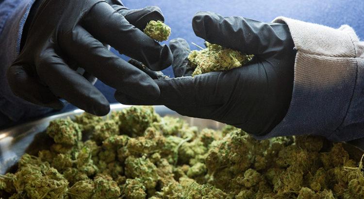 Idées reçues sur le cannabis médical