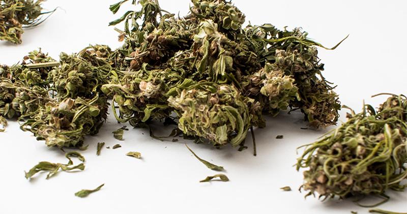 Cannabis CBD Italie