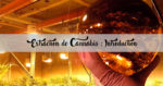 Extraction de Cannabis : Introduction