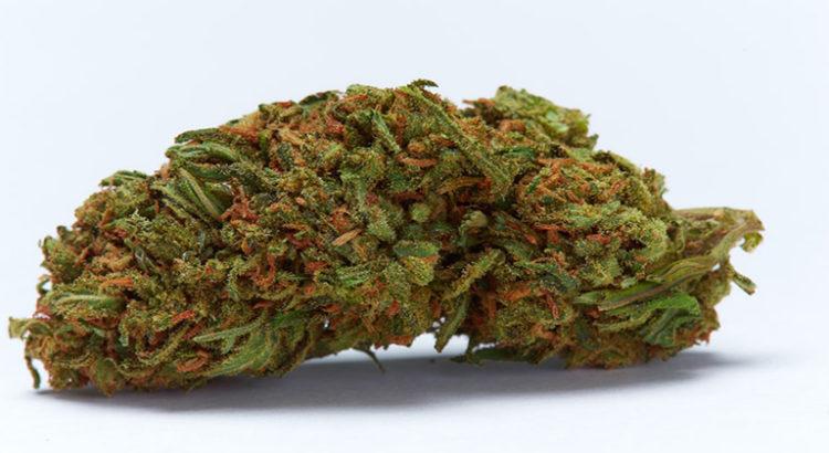 Oregon : ces noms de variétés de cannabis interdits