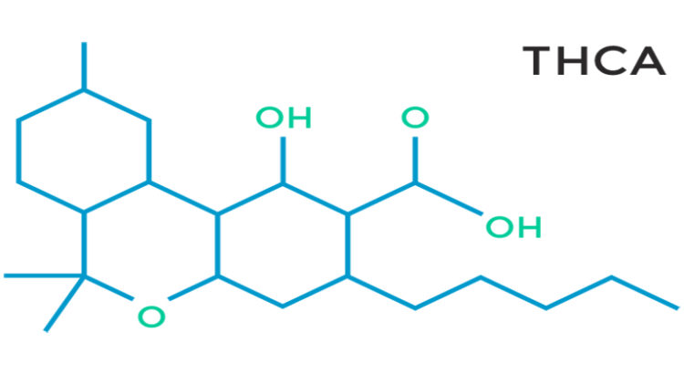 Le THC serait efficace contre les maladies neurodégénératives