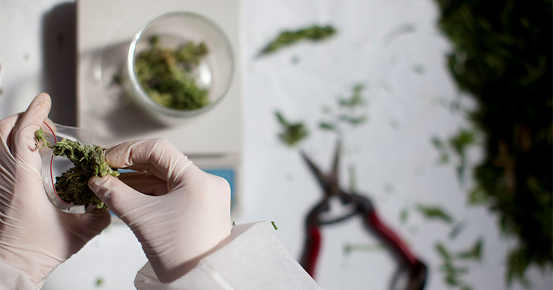 Cannabis médical aux Philippines