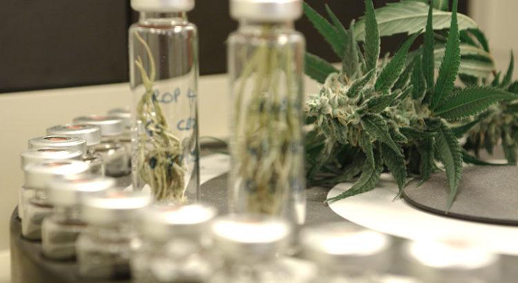 Cannabis au Danemark