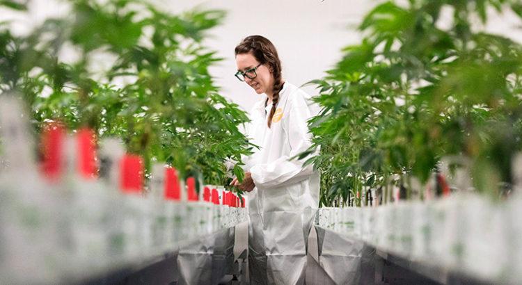Canopy Growth va produire du cannabis en Espagne