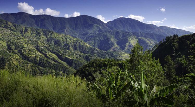 Culture de cannabis en Jamaïque