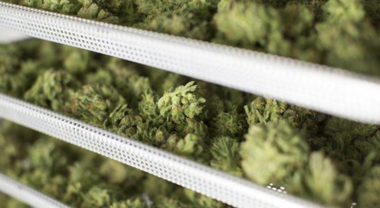 Légalisation du cannabis au Nouveau Brunswick