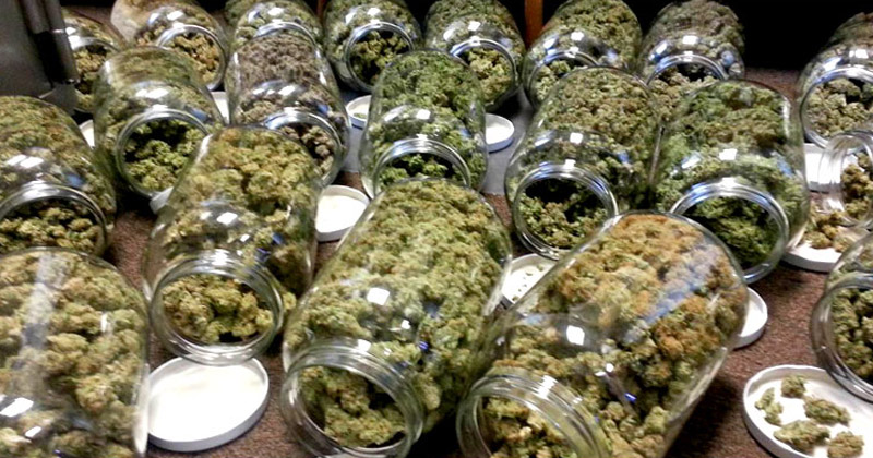 Autorisation de consommer du cannabis pour les rastas italiens