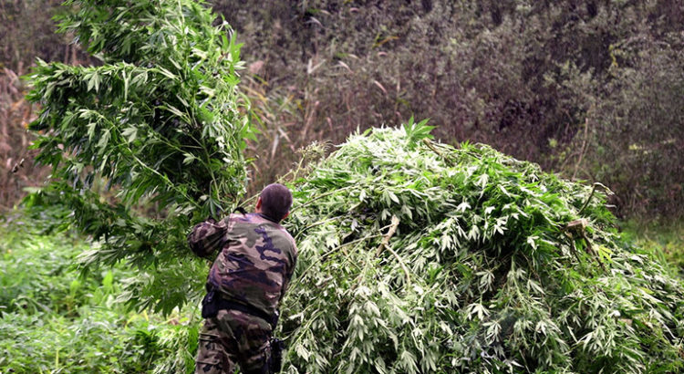 Saisies de cannabis en octobre en France