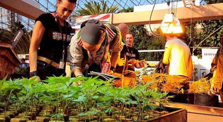Clones de cannabis en Autriche