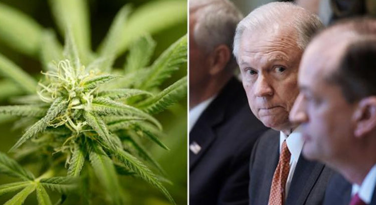 Cannabis vs. Jeff Sessions